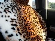 Накидка из 100% натуральной овечьей шерсти, леопард