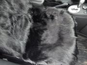 Накидка из натуральной овечьей шерсти-длинный мех (черный)